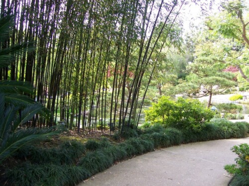 Earl Burns Miller Japanese Garden Discover Nikkei